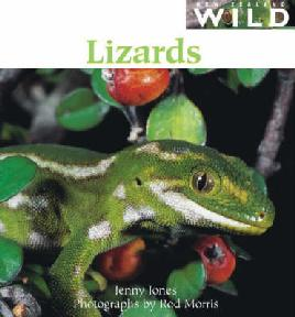 Book Cover of Lizards