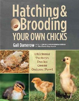 Book cover of Hatching and brooding your own chicks